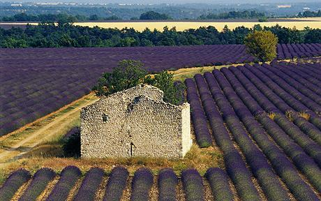 Provence, Lavender, Architectural salvage tour, Sourcing antiques in France, Buying antiques in Provence, The Antiques Diva, Flea Market Finds