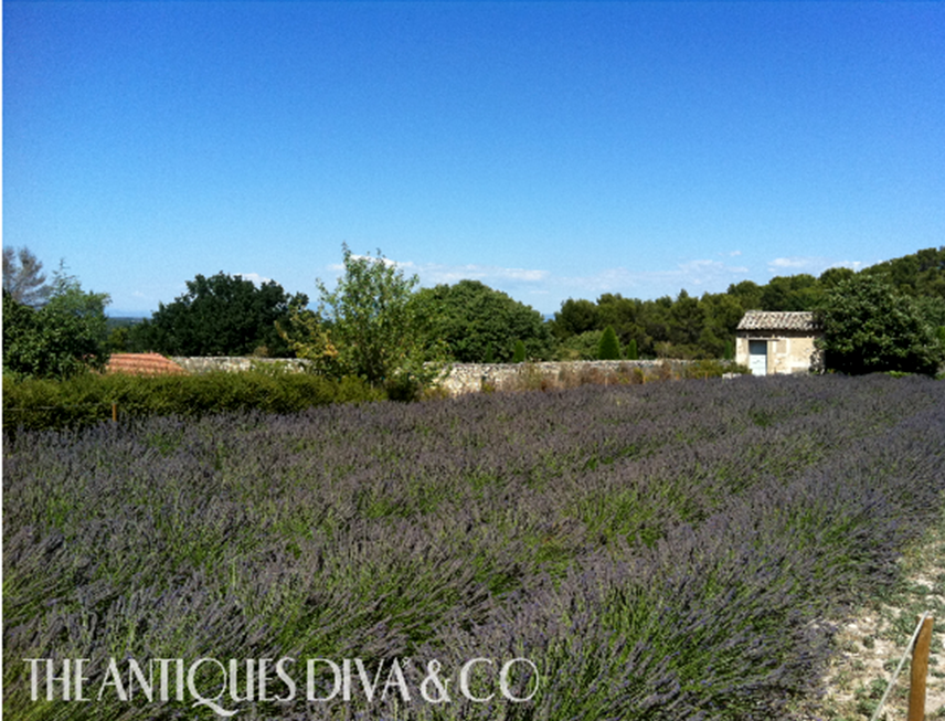 Lavender in Provence, Antiquing in Provence, The Antiques Diva Tours in France, Antique buying tours in south of France, Antiques Diva Provence Tour