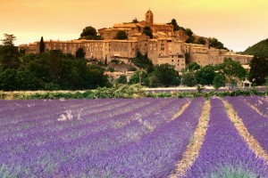 Gifts of Provence-Olive Oil, Soap, Lavender Field Provence