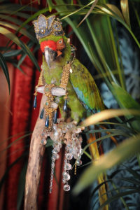 parrot adorned with Ara Vintage Jewelry
